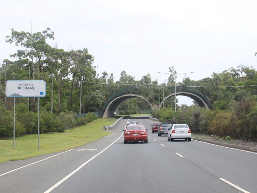 Passagem de animais selvagens em Brisbane