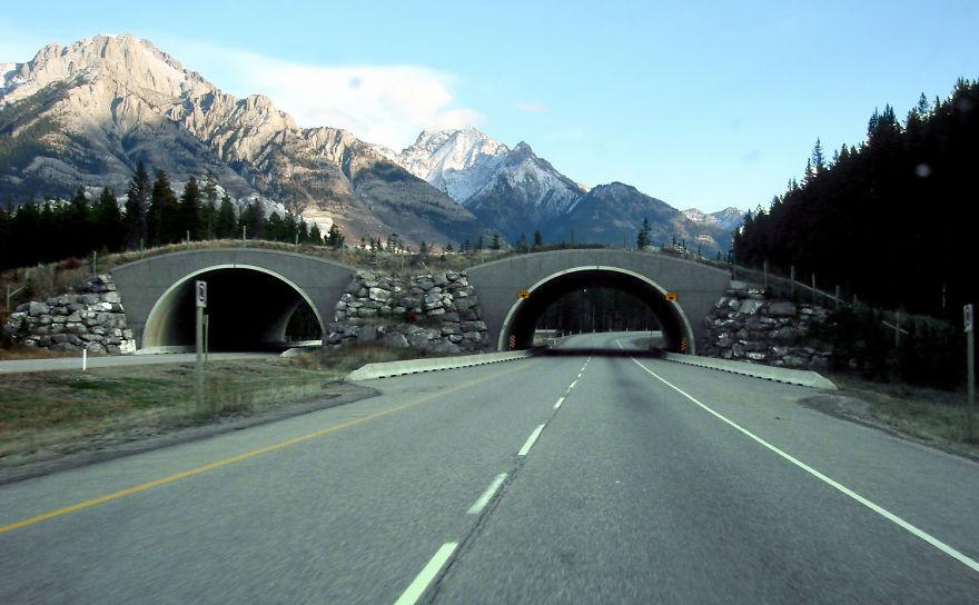 Passagem para animais selvagens em Alberta no Canada