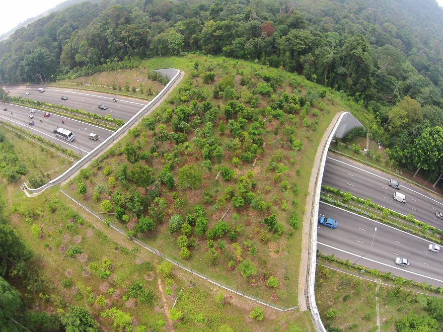 Ecoduto em Cingapura
