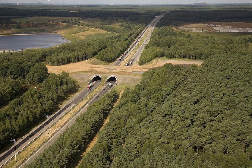 Ecoduto na Belgica
