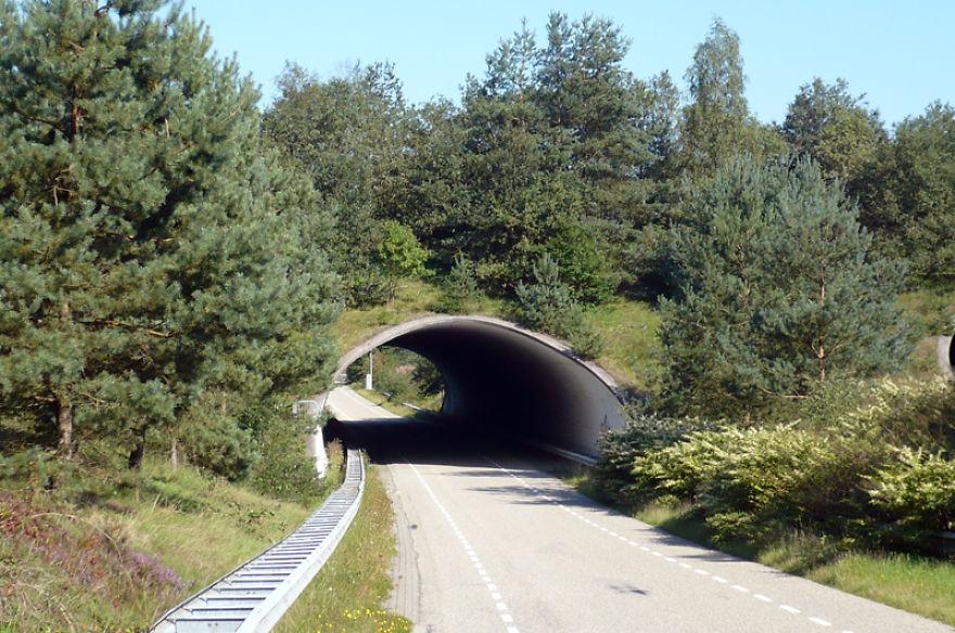 Ecoduto na Holanda