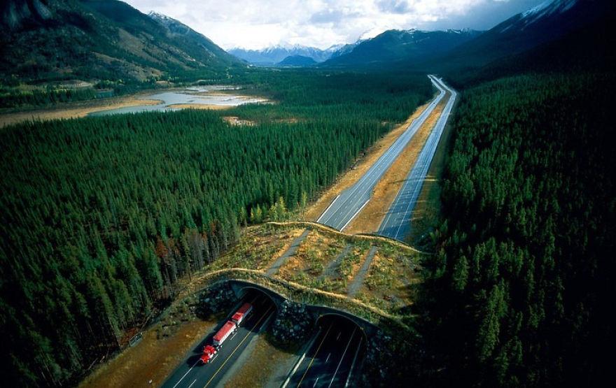 Ecoduto no Parque Nacional Banff no Canada