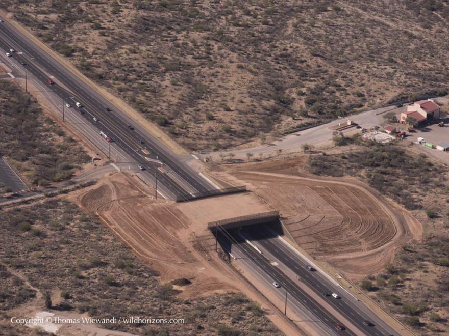 Passagem de animais no Deserto de Sonora
