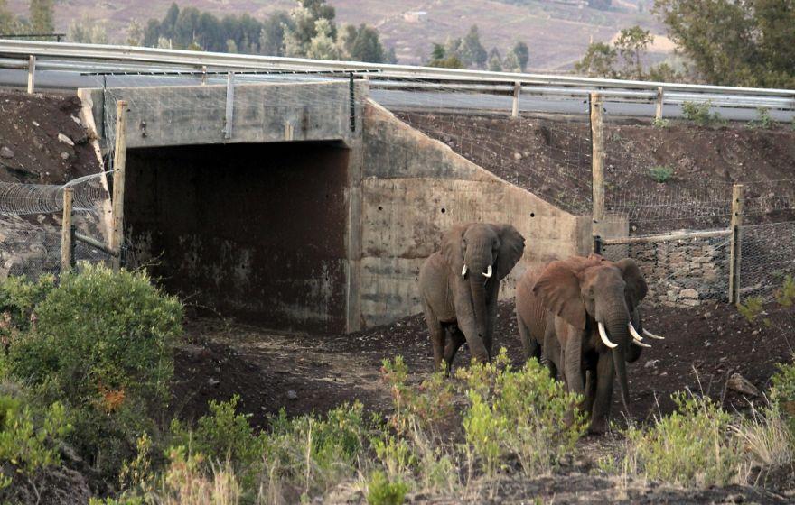 Passagem de elefantes no Quênia