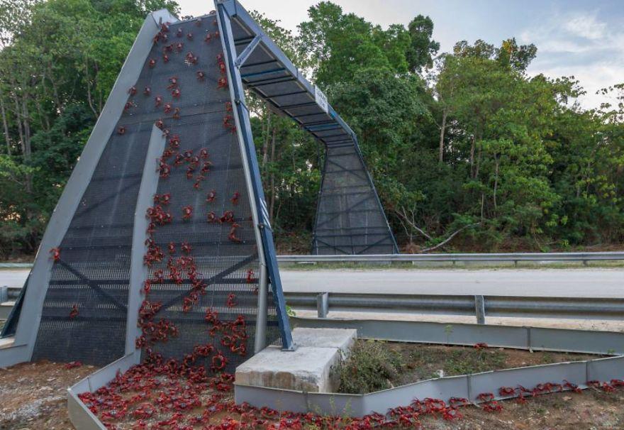 Ponte para caranguejos em Christmas Island na Austrália