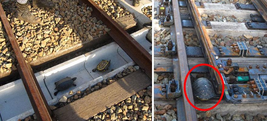 Túnel para tartarugas no Japão