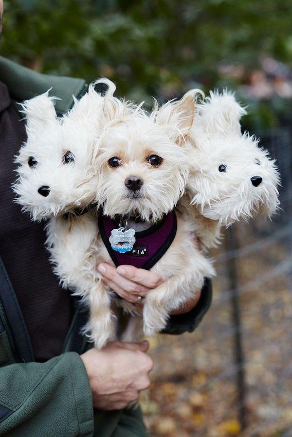 cachorrinhos-roupas (1)
