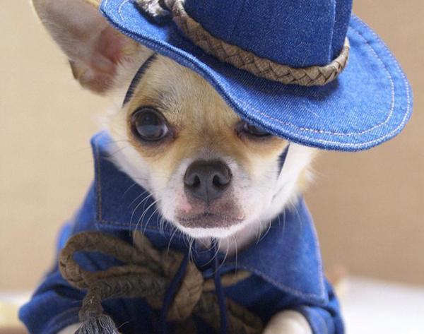 cachorrinhos-roupas (10)