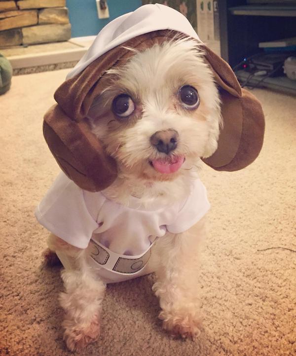cachorrinhos-roupas (11)