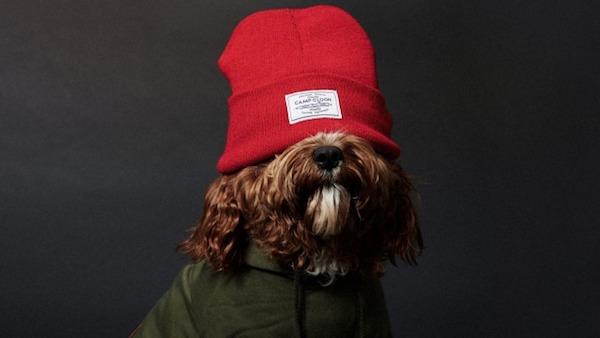 cachorrinhos-roupas (2)