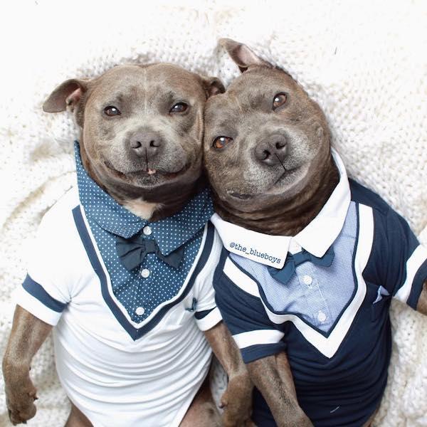 cachorrinhos-roupas (4)