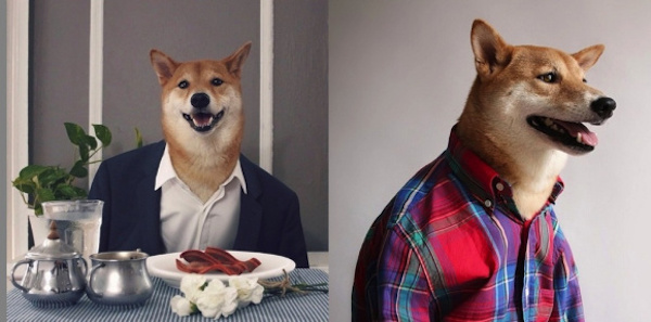 cachorrinhos-roupas (9)