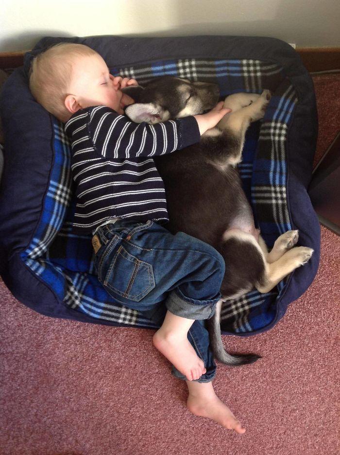 caes-criancas-dormindo (10)