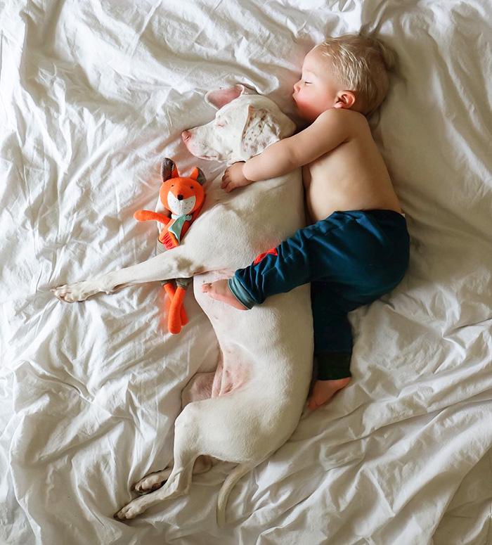 caes-criancas-dormindo (11)