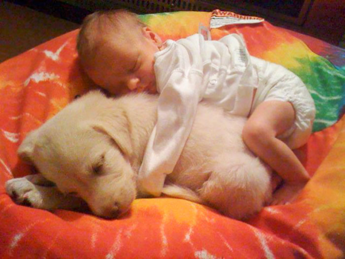 caes-criancas-dormindo (14)