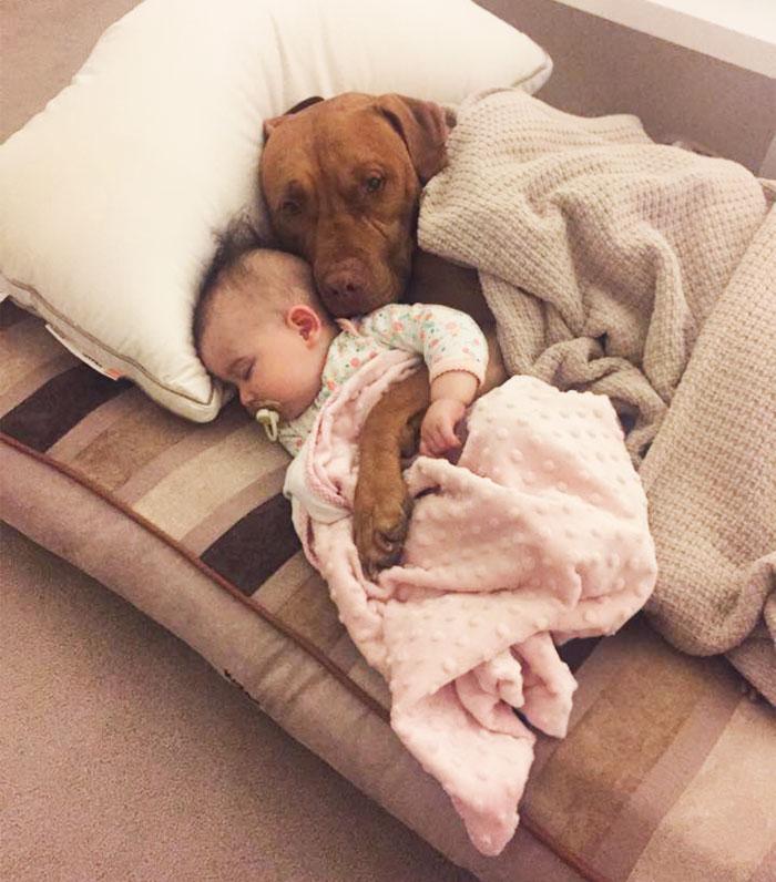 caes-criancas-dormindo (15)