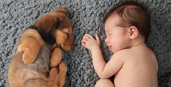 caes-criancas-dormindo (18)