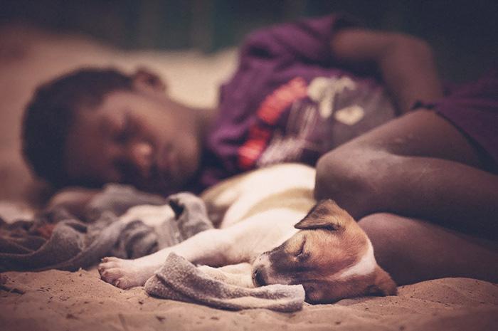 caes-criancas-dormindo (19)