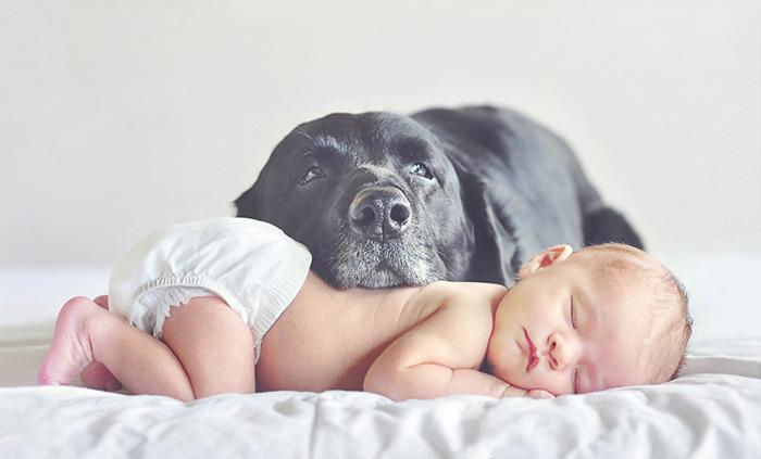 caes-criancas-dormindo (23)