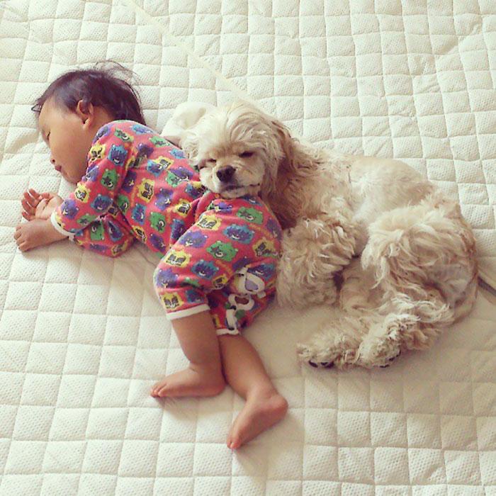 caes-criancas-dormindo (24)