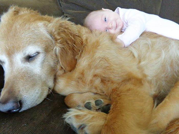caes-criancas-dormindo (3)
