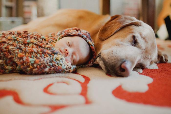 caes-criancas-dormindo (30)