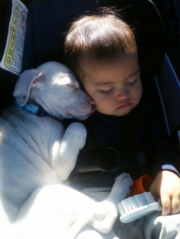 caes-criancas-dormindo (32)