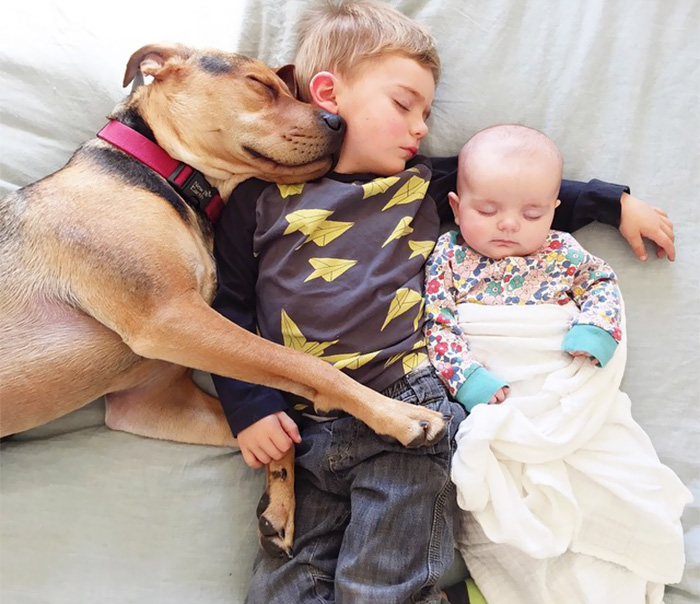 caes-criancas-dormindo (35)