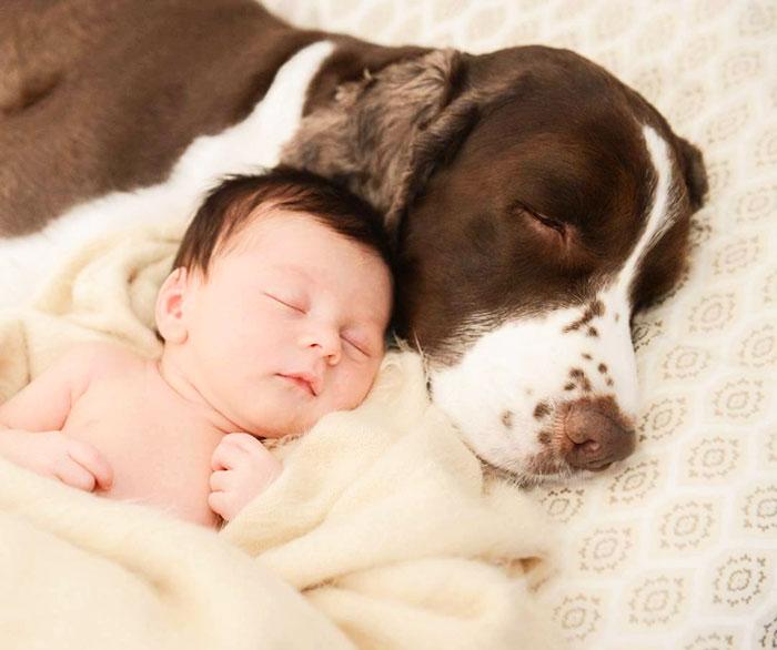 caes-criancas-dormindo (38)