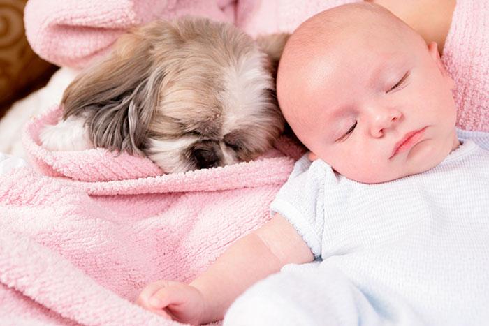 caes-criancas-dormindo (42)