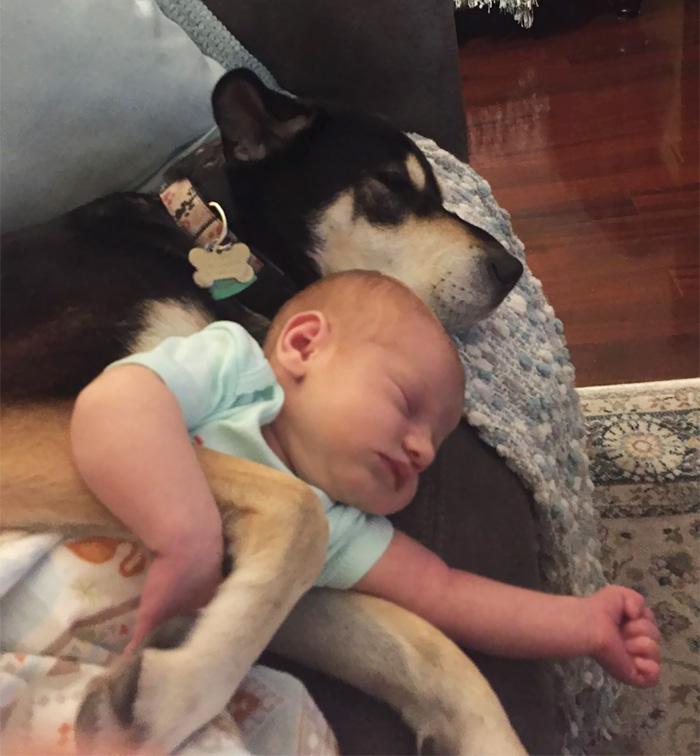 caes-criancas-dormindo (45)