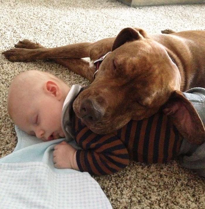 caes-criancas-dormindo (46)