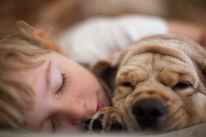 caes-criancas-dormindo (49)
