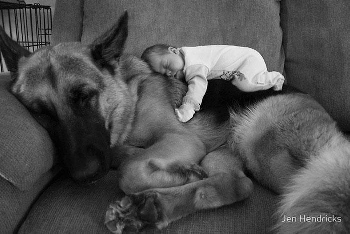 caes-criancas-dormindo (5)