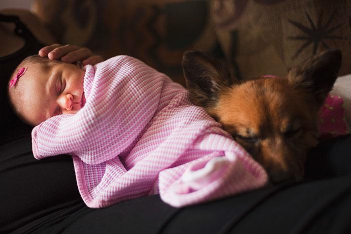 caes-criancas-dormindo (57)