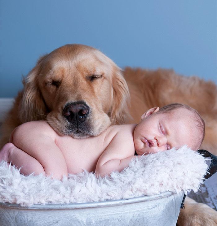 caes-criancas-dormindo (6)