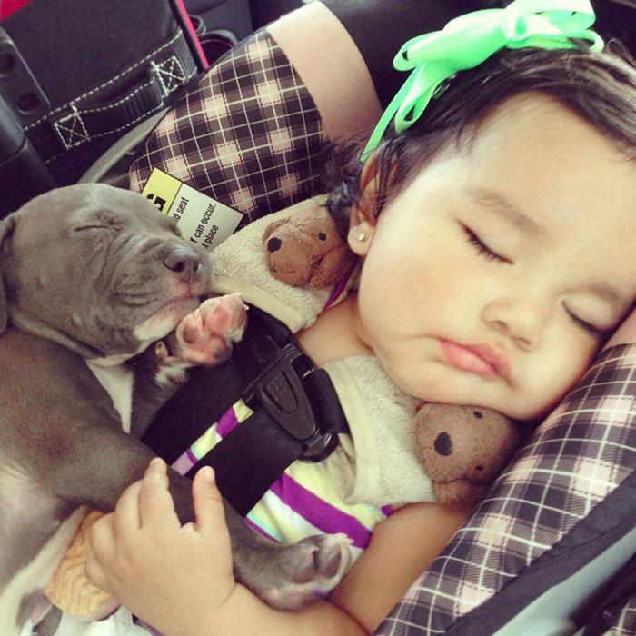 caes-criancas-dormindo (63)