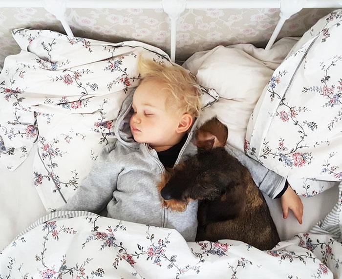 caes-criancas-dormindo (64)