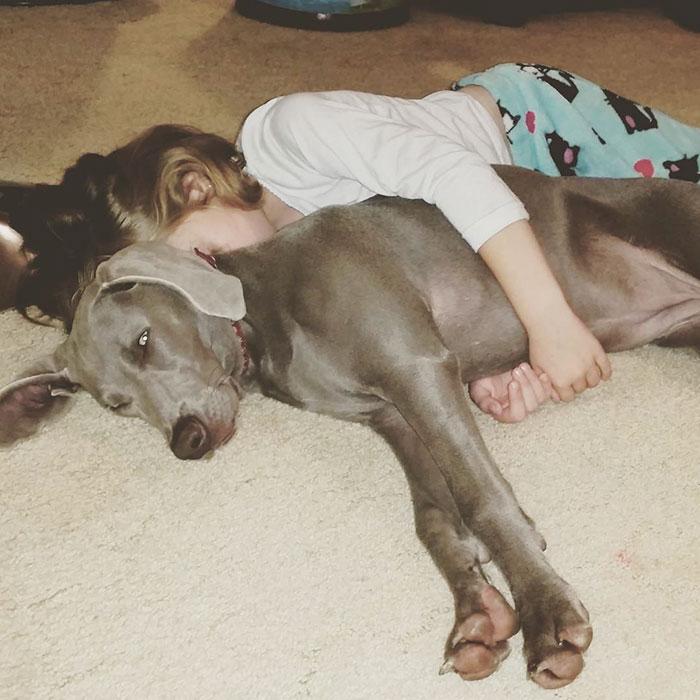 caes-criancas-dormindo (65)
