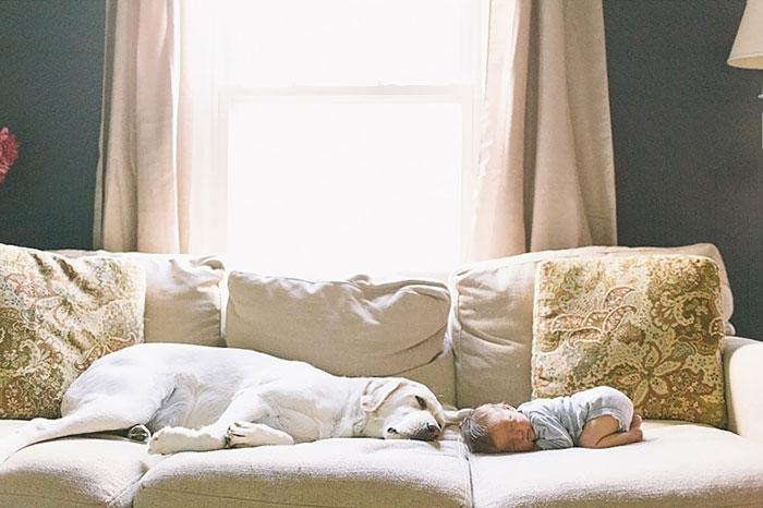 caes-criancas-dormindo (67)