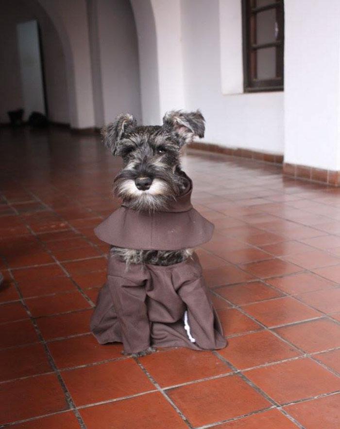 cao-monge (1)