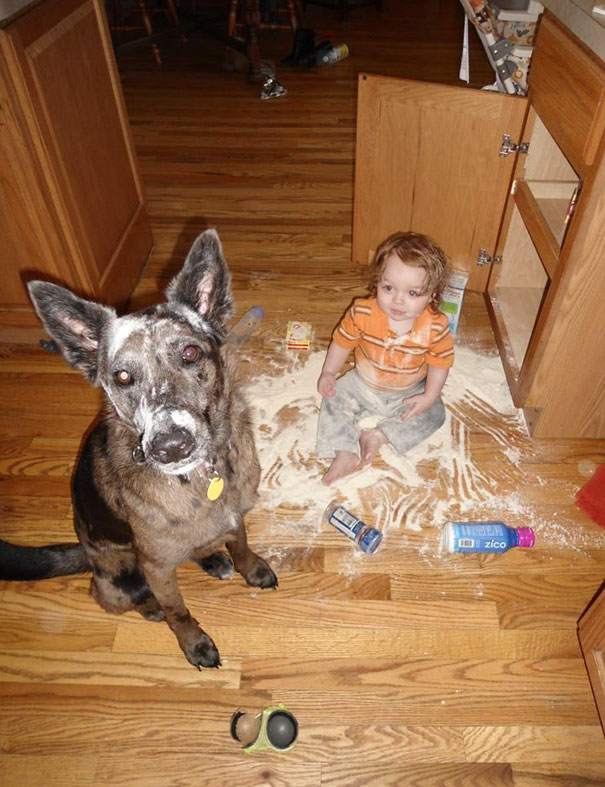 animais-vs-criancas (16)