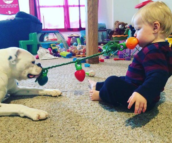 animais-vs-criancas (17)