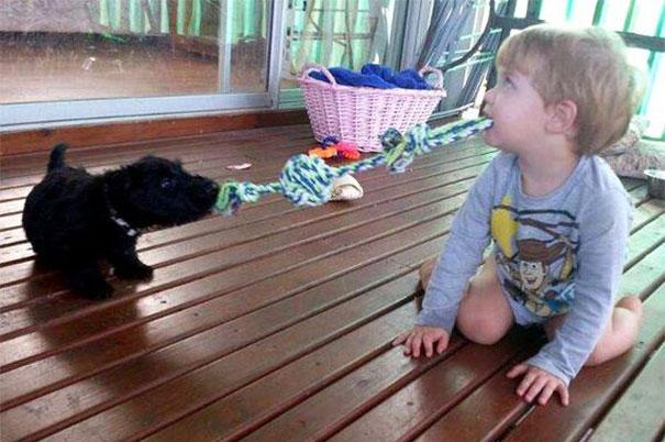 animais-vs-criancas (34)