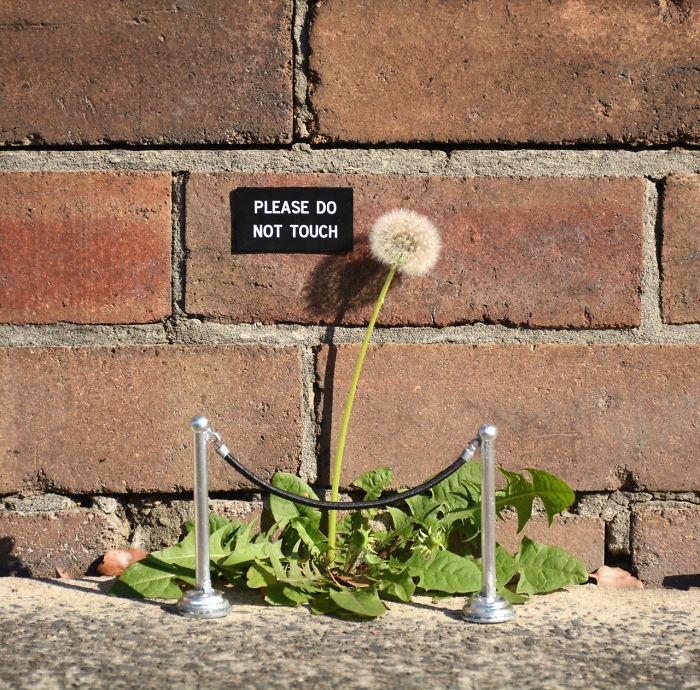 arte-de-rua-com-natureza (16)