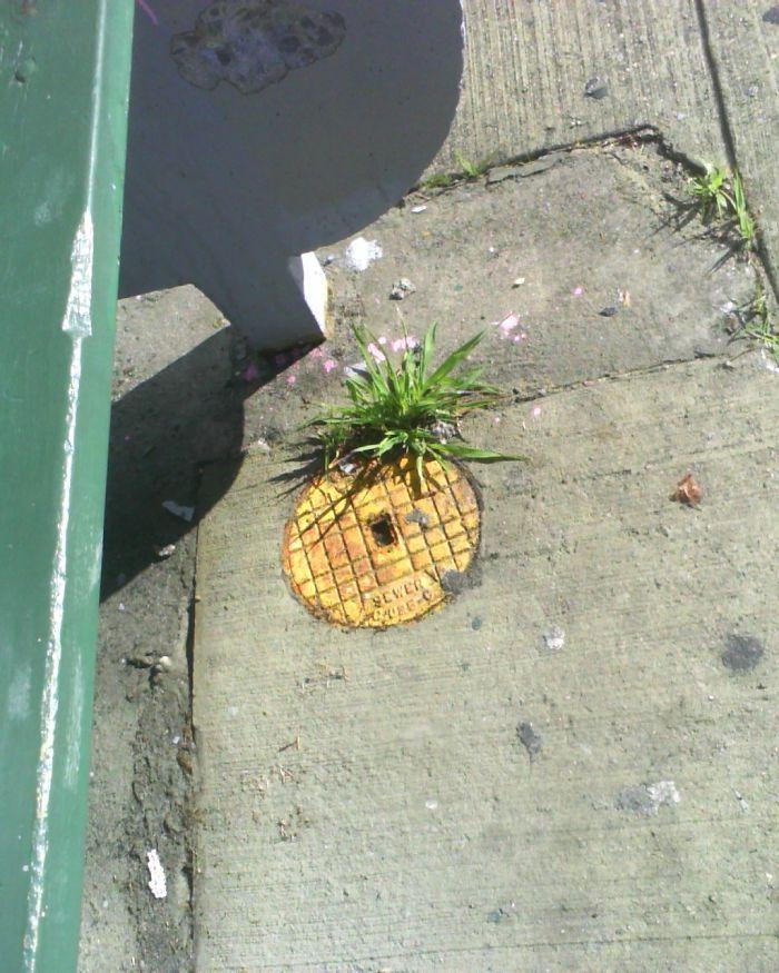 arte-de-rua-com-natureza (31)