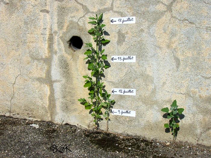 arte-de-rua-com-natureza (58)