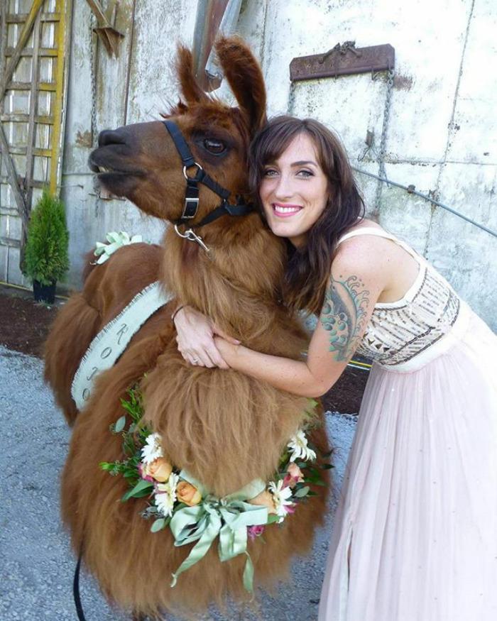 lhamas-casamentos (14)
