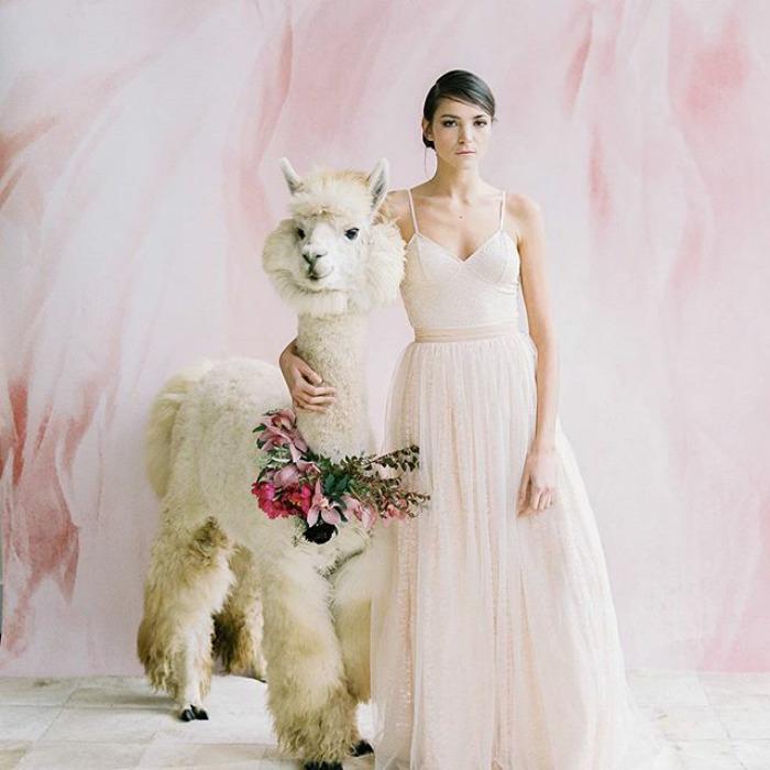 lhamas-casamentos (19)
