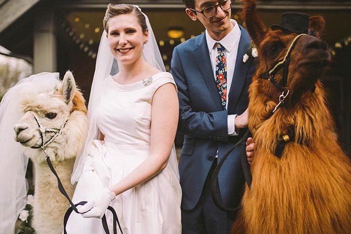 lhamas-casamentos (30)